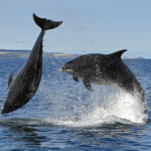 Why are whales and dolphins important for the oceans?